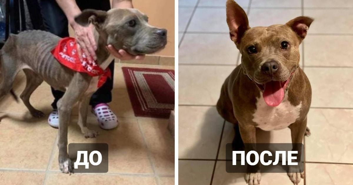 17 фотографий бездомных животных до и после того, как в их жизни появились новые хозяева и новый дом
