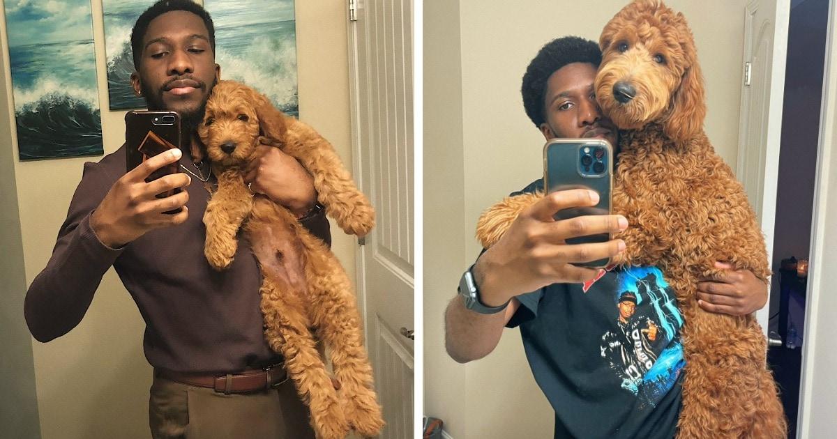 Хозяева собак поделились фото своих любимцев в разном возрасте и показали, в каких гигантов выросли их малыши