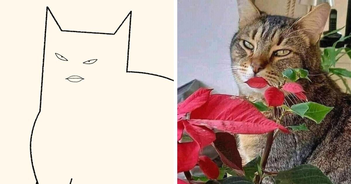 Художник создаёт минималистичные рисунки мемных котов, делая их ещё смешнее и забавнее