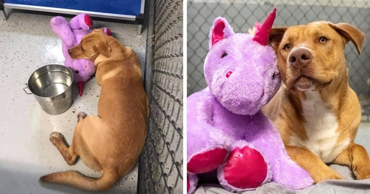 В США бродячий пёс 5 раз пытался украсть игрушку-единорога из магазина. Его поймали и изменили жизнь к лучшему