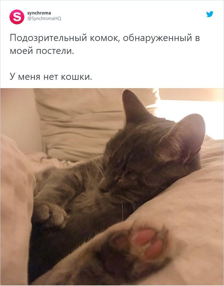Пользователи сети делятся случаями, когда находили у себя дома котов. Но это были совсем не их коты
