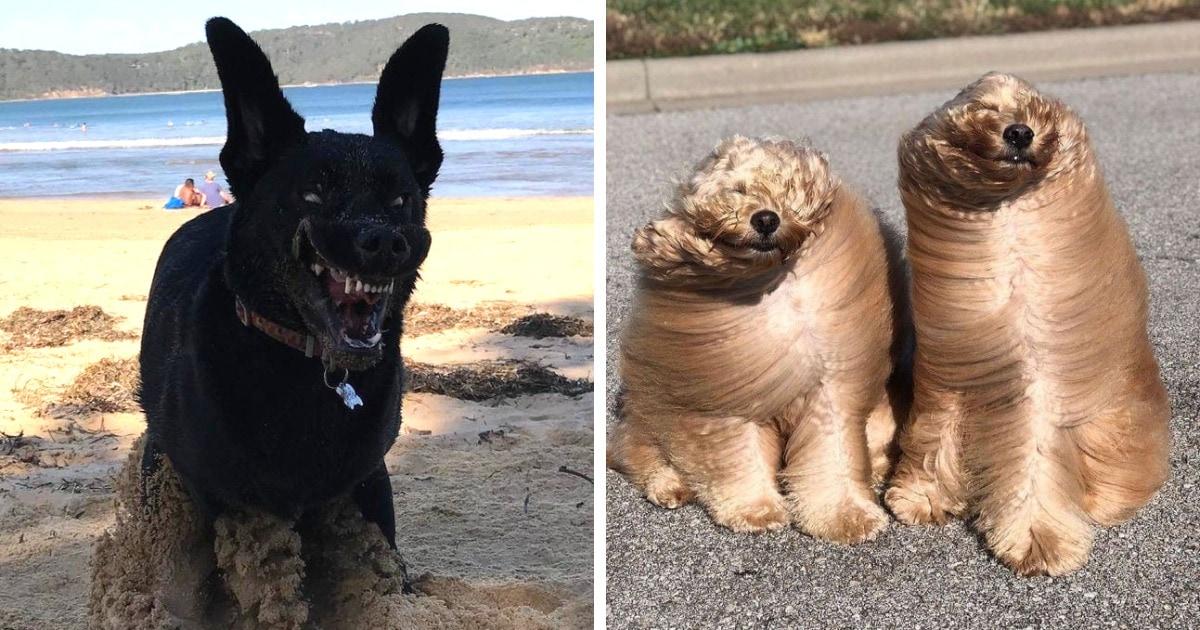 17 безумно смешных и милых фотографий собак, которые могут вызвать улыбку даже в самый хмурый день