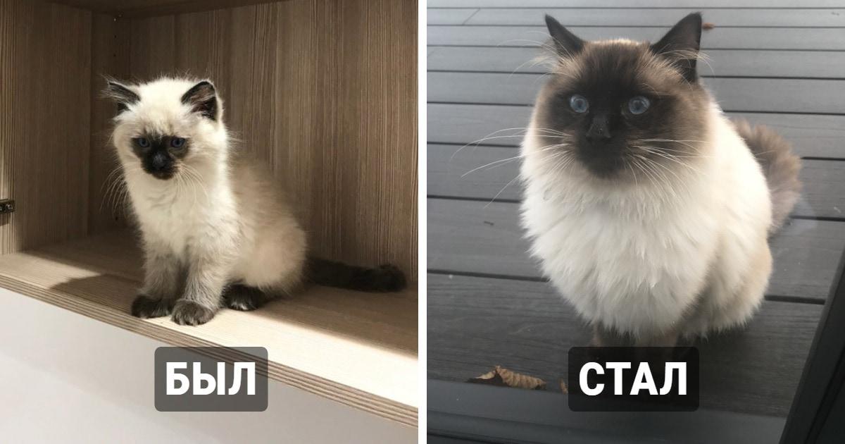 18 котят, которые со временем превратились в солидных котов, но нисколько не утратили своего очарования