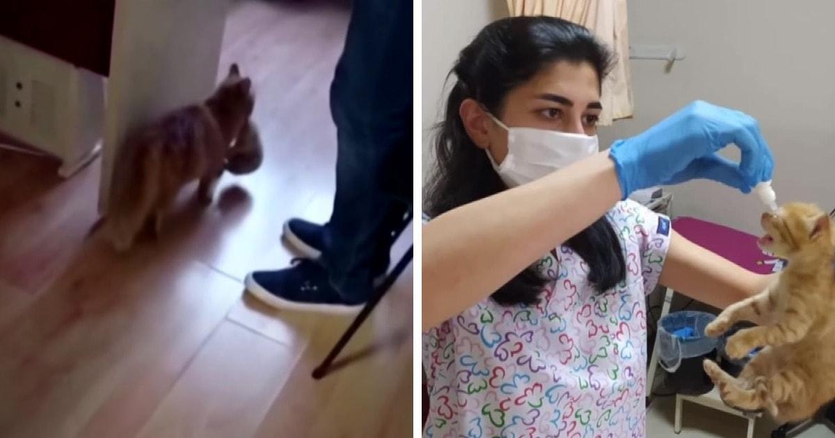 В Турции бездомная кошка пришла к врачам вместе с котятами. Им была нужна помощь, и она знала, куда идти