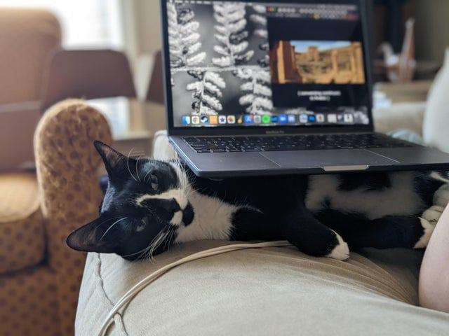 16 забавных и трогательных фотографий котов, которые внезапно осознали, что вся жизнь — это тлен