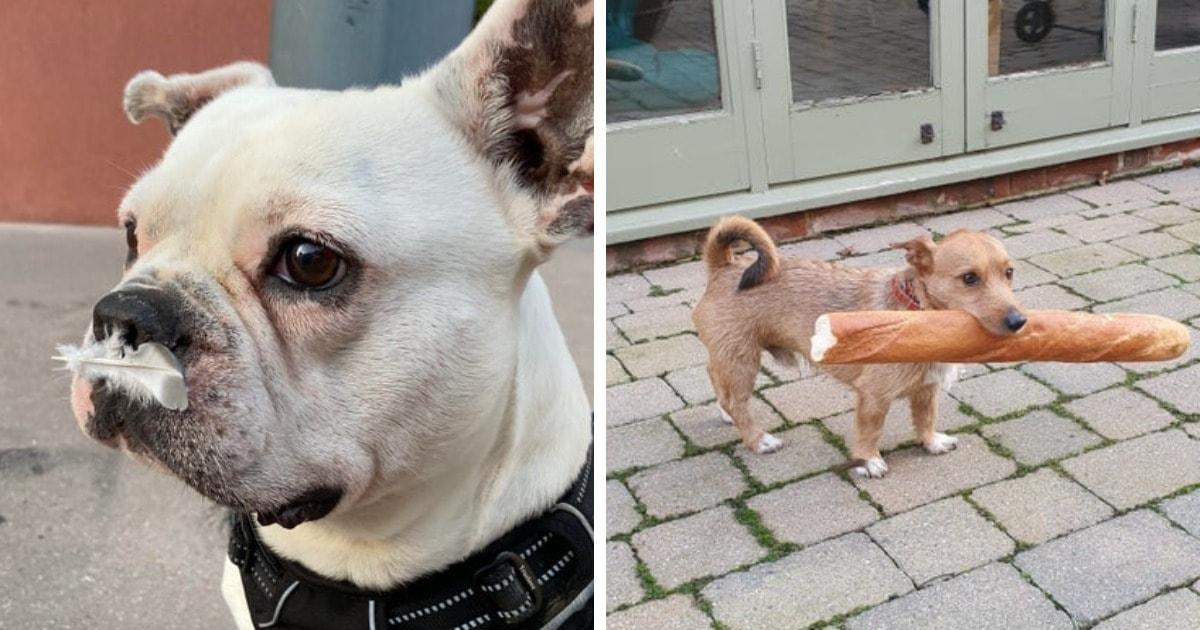 18 забавных случаев, когда собаки демонстрировали окружающим, что они тоже не против покуролесить