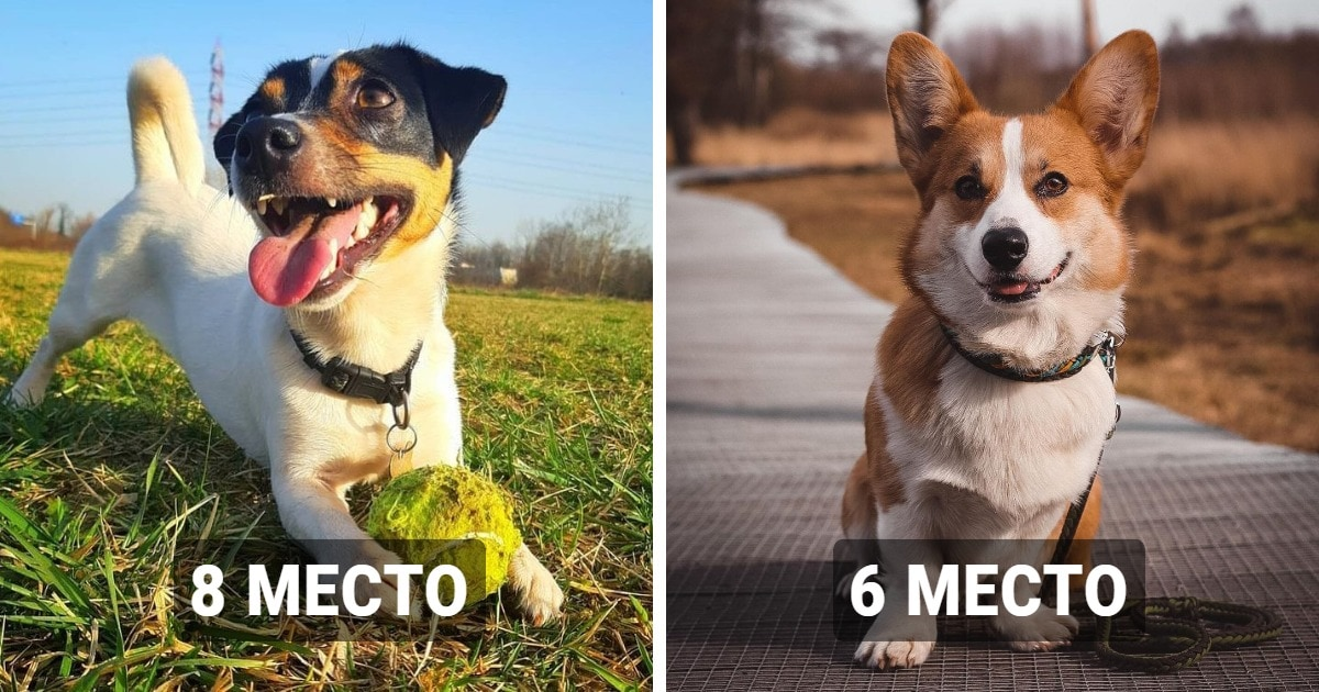 10 пород собак, которые оказались самыми популярными в России в 2020 году