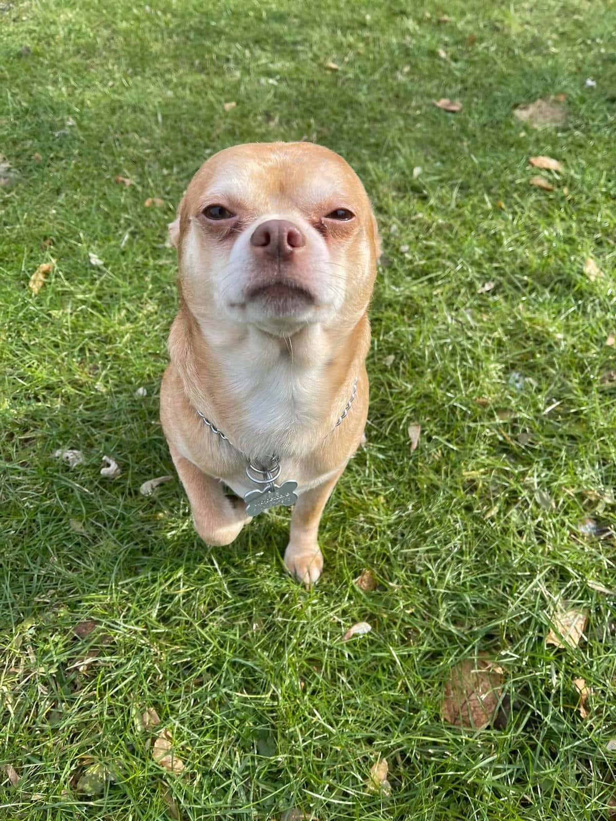 Кукла Чаки в теле собаки: бездомному псу написали такое честное резюме, что люди влюбились и хотят его себе