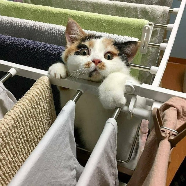 18 фотографий озорных и дурашливых котов, которые не дают соскучиться своим хозяевам
