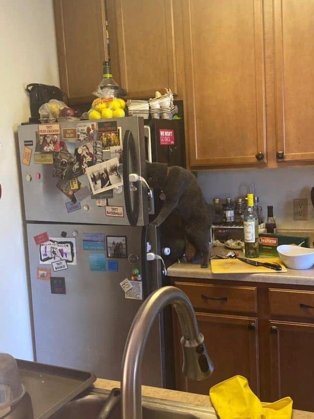 16 фотографий, которые покажут, что котовья наглость не знает никаких границ