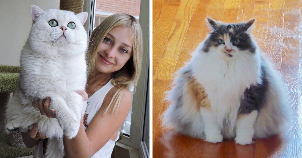 15 фотографий огромных домашних котов, чьё пушистое великолепие видно издалека