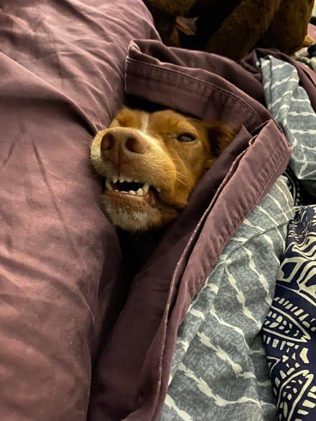 15 фотографий собак, которые напрочь забыли, как себя вести, и рассмешили людей своей дурашливостью