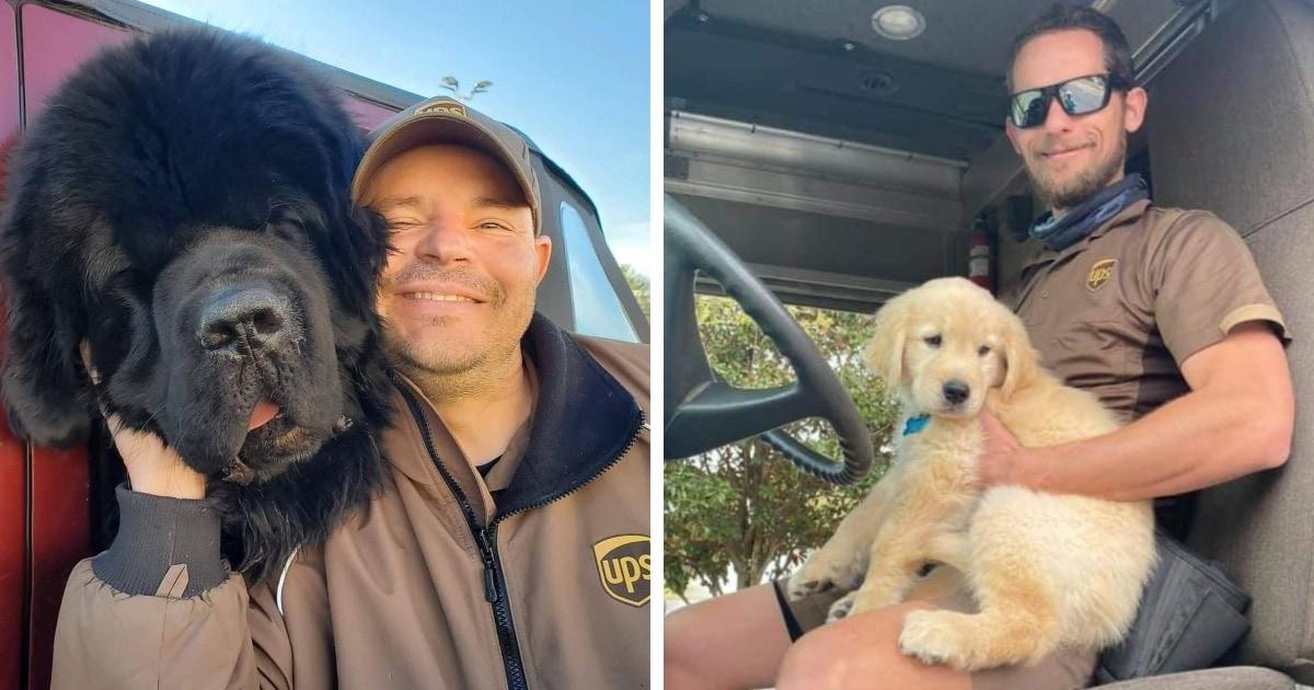 Американские курьеры показывают фото с собаками, которых они встречают. И это запредельная концентрация милоты