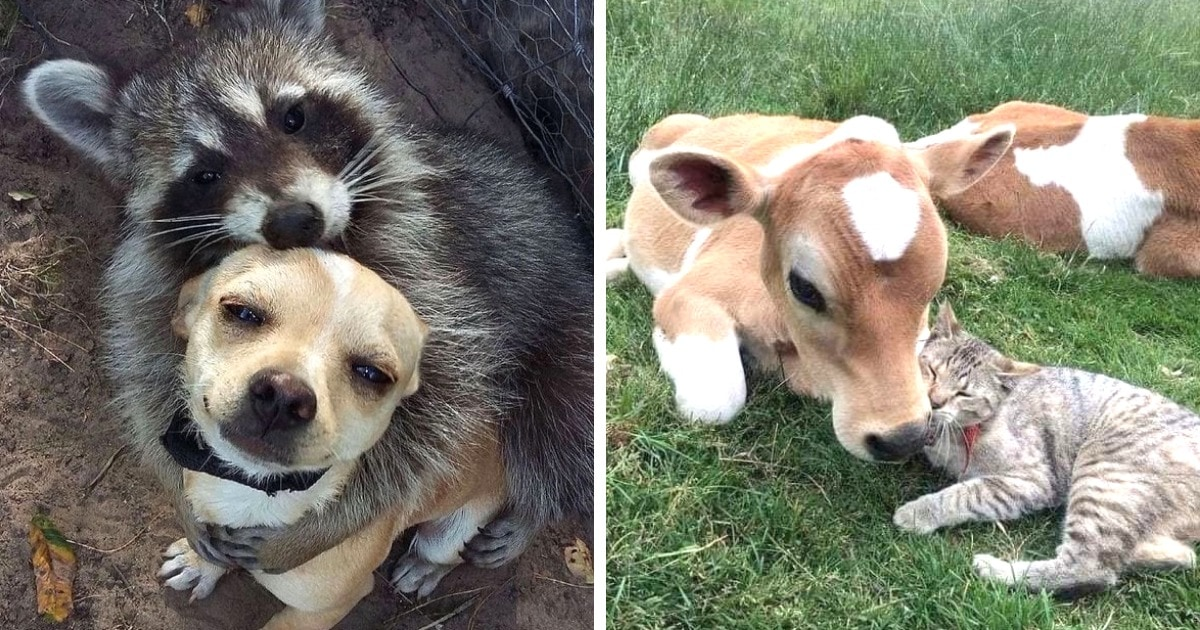 17 очаровательных случаев, когда коты и собаки заводили дружбу с дикими животными