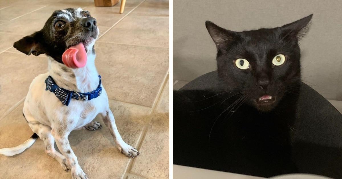 17 котиков и собак, которые выдают такие странности, что порой даже их хозяева не могут это объяснить