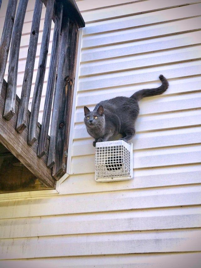 17 случаев, когда котов обнаружили там, где их не должно было быть, но пушистых наглецов ничто не остановило