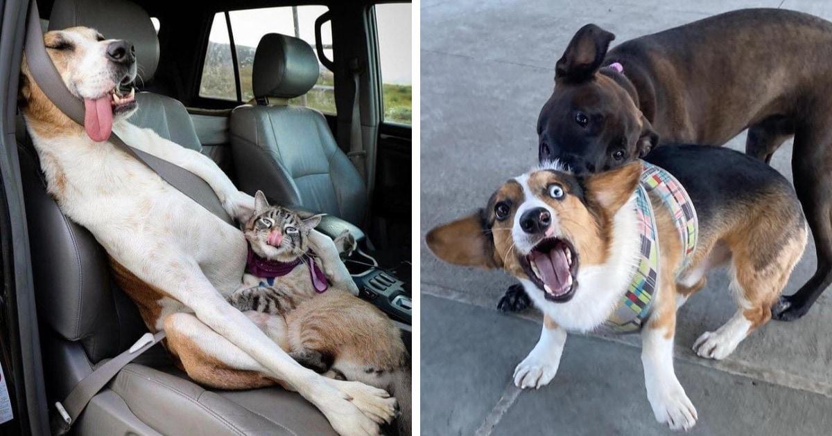 18 крайне забавных фотографий, которые покажут, как несколько животных в одном доме уживаются между собой