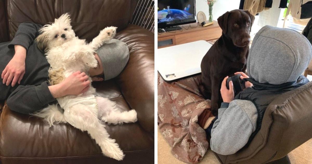 17 забавных собак, которые ни во что не ставят личное пространство людей и беспардонно в него вторгаются