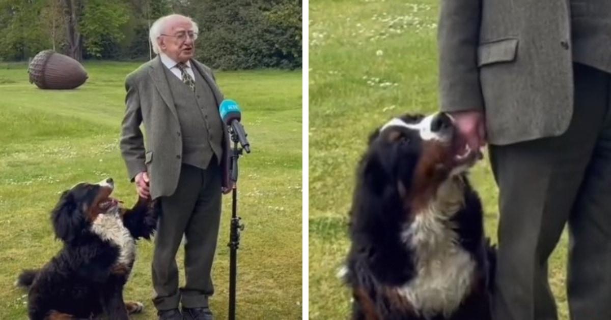 Президент Ирландии дал интервью вместе со своим щенком, и это была ошибка. Ведь пёс украл всеобщее внимание