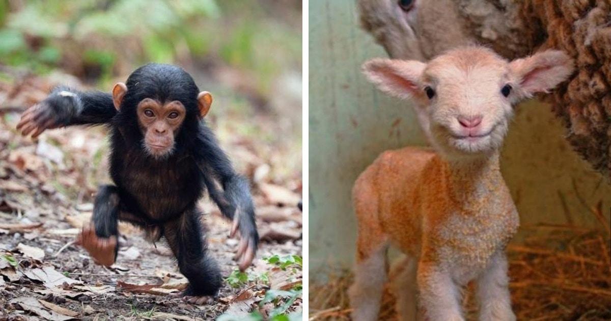 17 фотографий детишек животных, которые только родились, но уже готовы забрать ваши сердечки