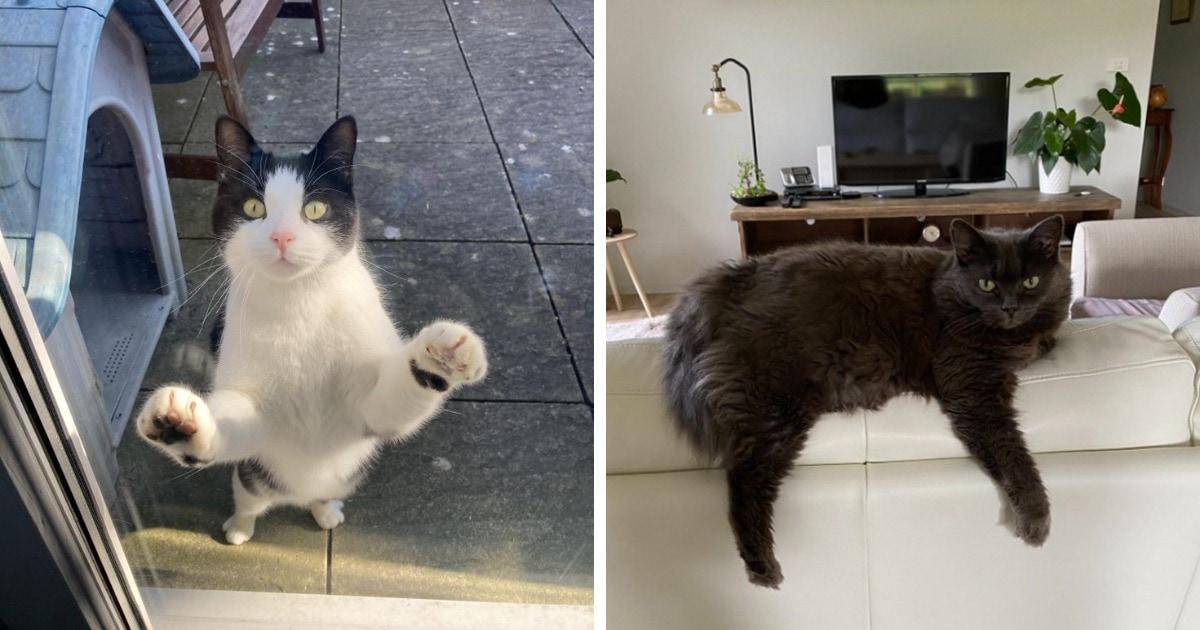 17 случаев, когда люди обнаруживали у себя дома соседских котов, но впадали не в шок, а в умиление