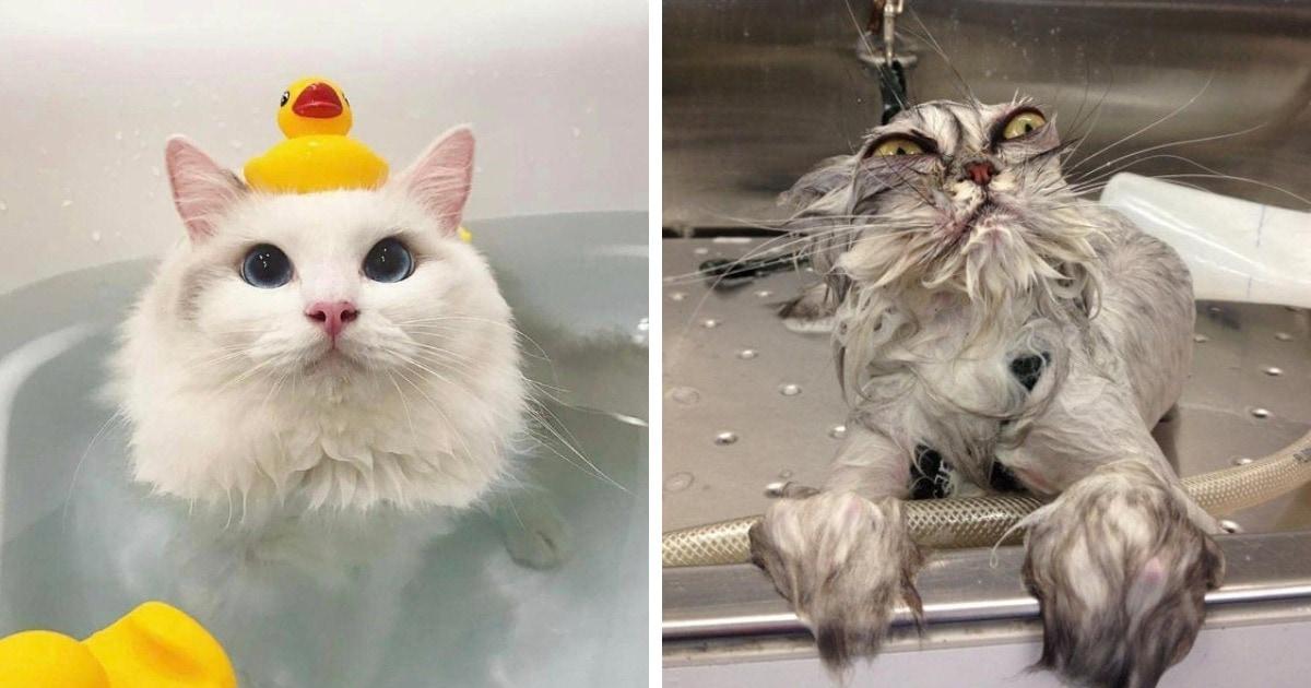 15 фотографий животных, у которых купание вызывает самые разные эмоции
