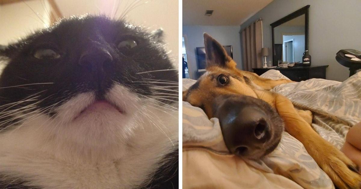 16 фотографий, которые доказывают, что утро владельца кота или собачки начинается не с кофе