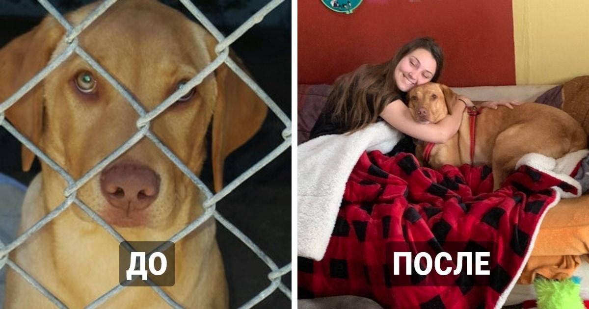 17 котиков и собак, которых наконец забрали из приюта, и теперь они обрели родной дом и заботливых хозяев