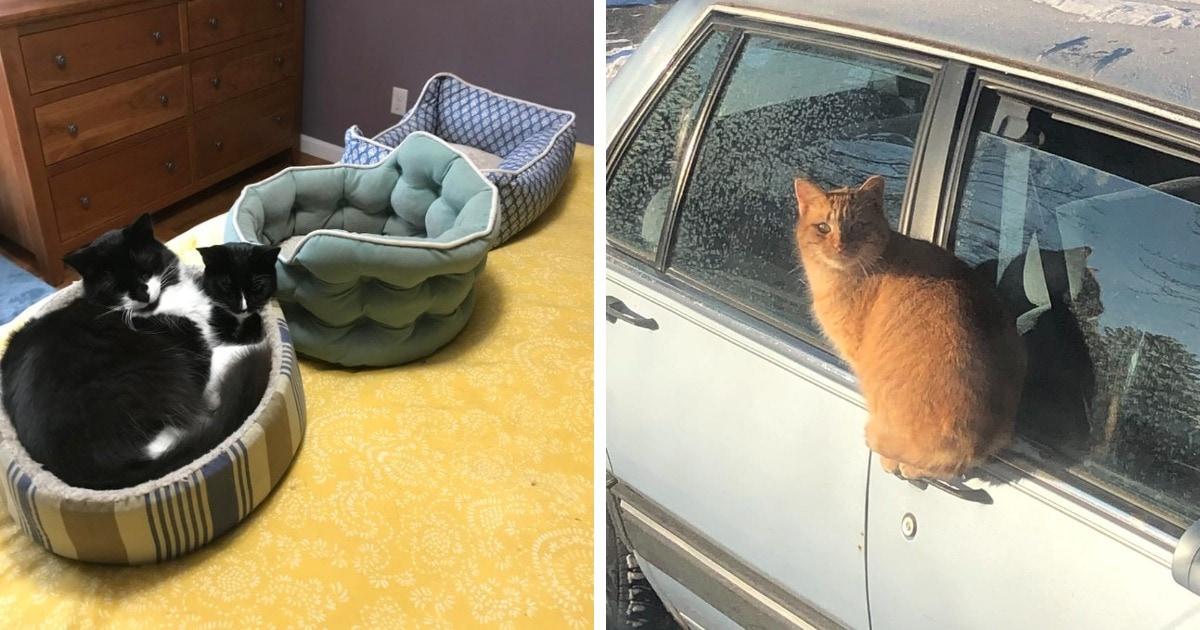 16 случаев, когда коты вели себя так странно и необъяснимо, что их логику не смог бы понять никто