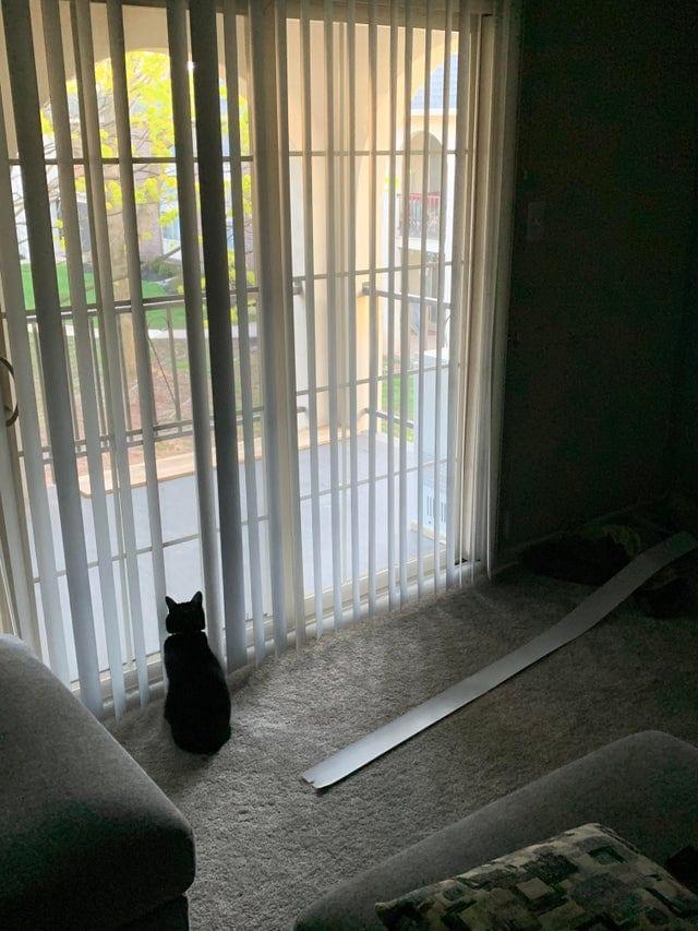 16 наглых котиков, которые закрепили за собой звание главных хулиганов дома