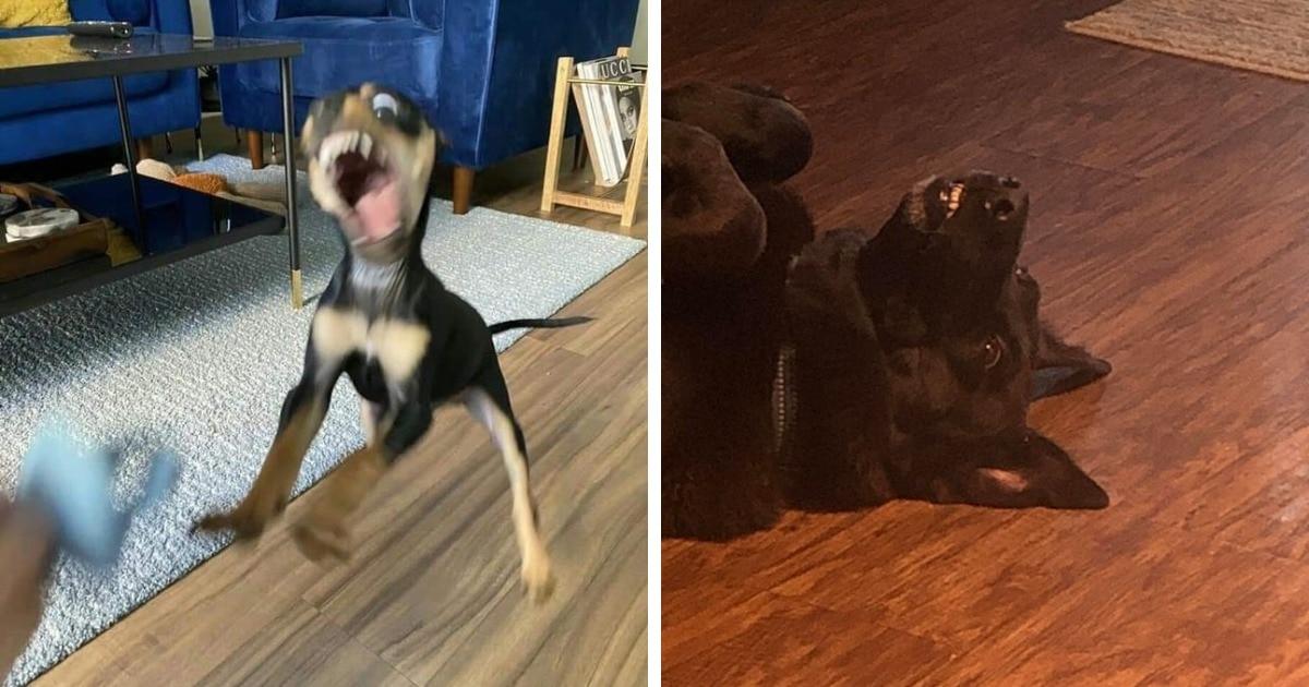 18 снимков собак, которые, кажется, забыли, как должны себя вести, и просто сломались