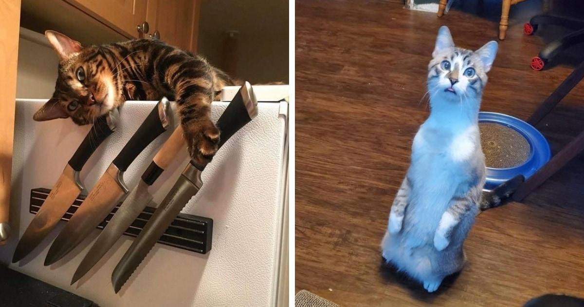 16 котиков, которые решили не оставлять своих хозяев без улыбки и продемонстрировали все свои чудачества