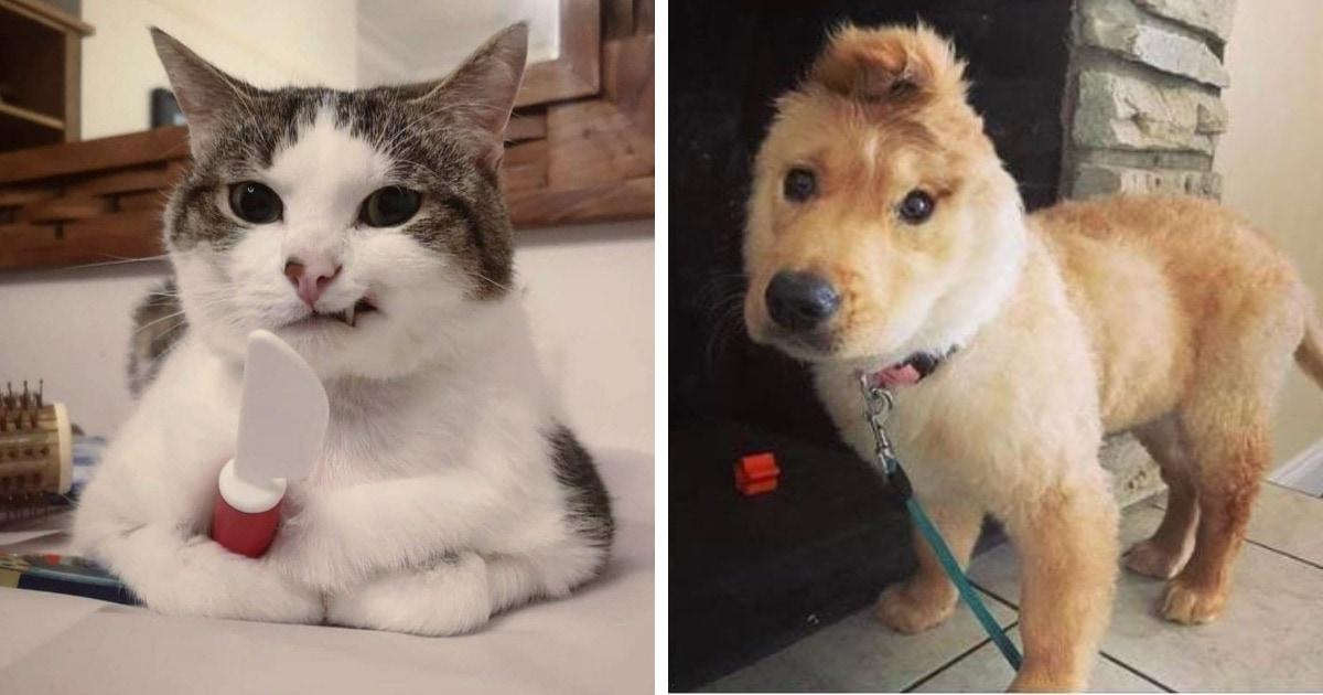 16 фото, которые доказывают, что необычные глаза, лапы и хвосты делают котов и собак ещё забавнее и милее