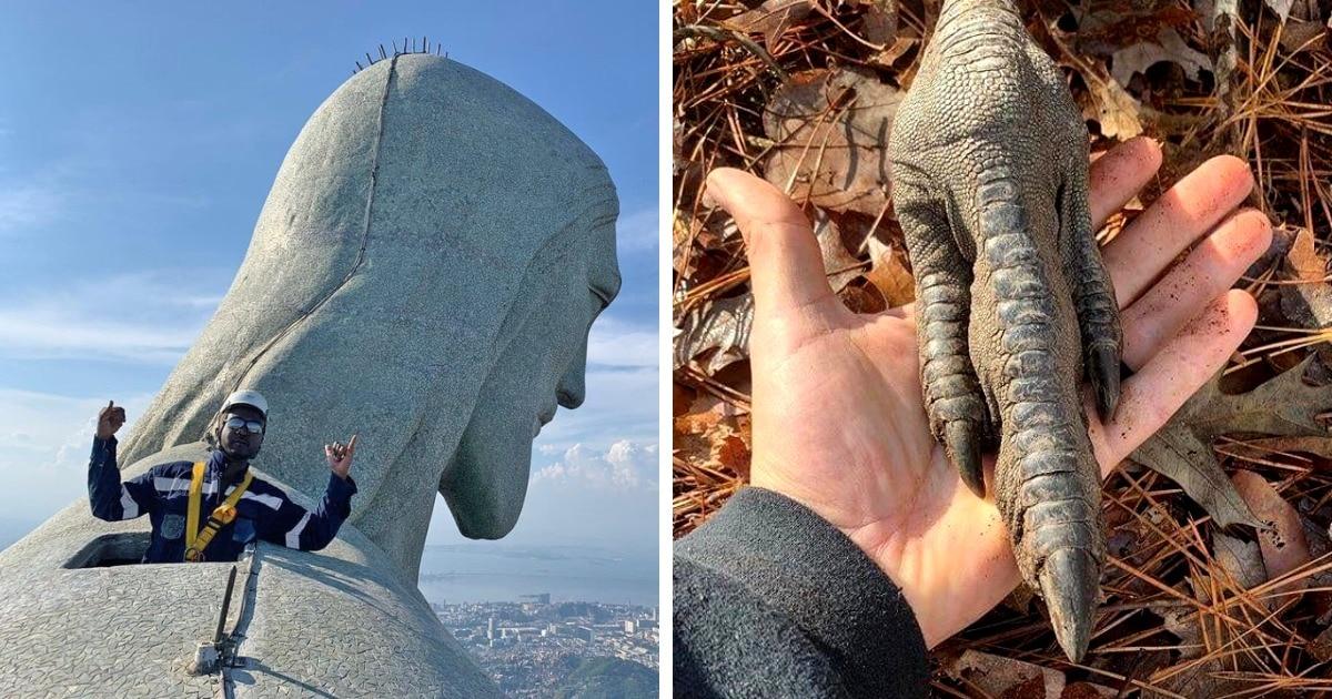 17 снимков, которые показывают, насколько огромны некоторые вещи, животные и растения в сравнении с человеком