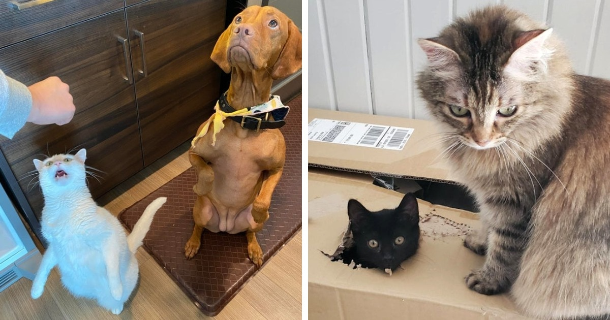 15 забавных фотографий, которые покажут, как ладят между собой несколько животных в одном доме