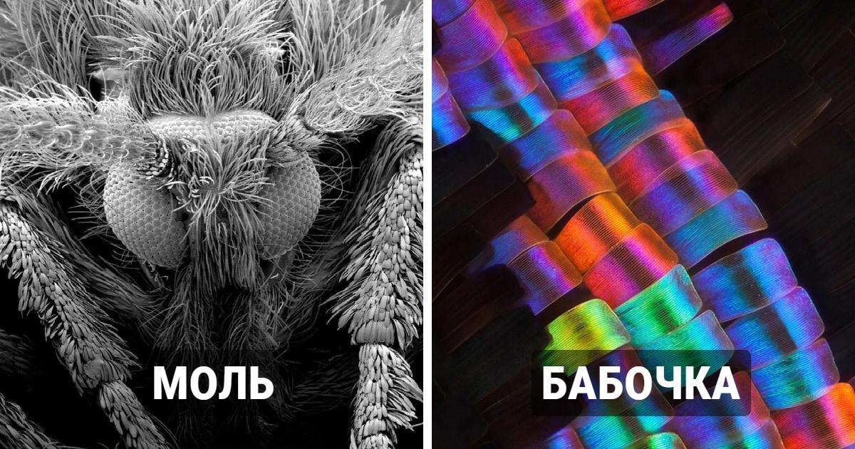 19 занимательных фотографий, которые покажут, какие секреты микроскоп открывает в привычных вещах
