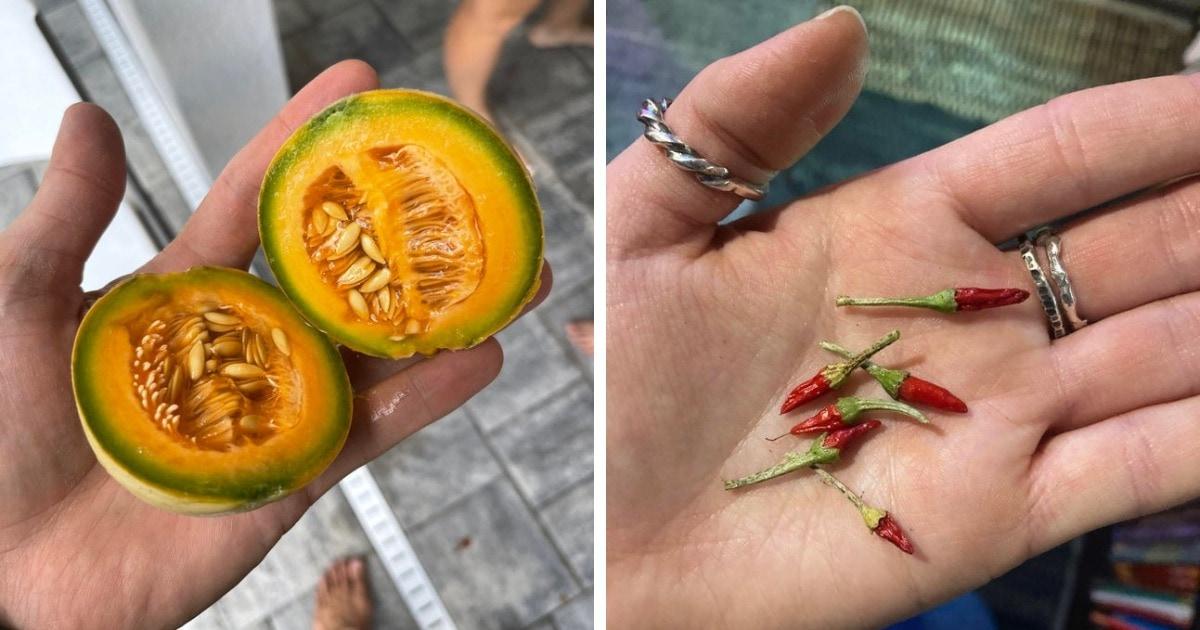 18 случаев, когда люди поделились снимками своего урожая, потому что поделиться самим урожаем было бы сложно