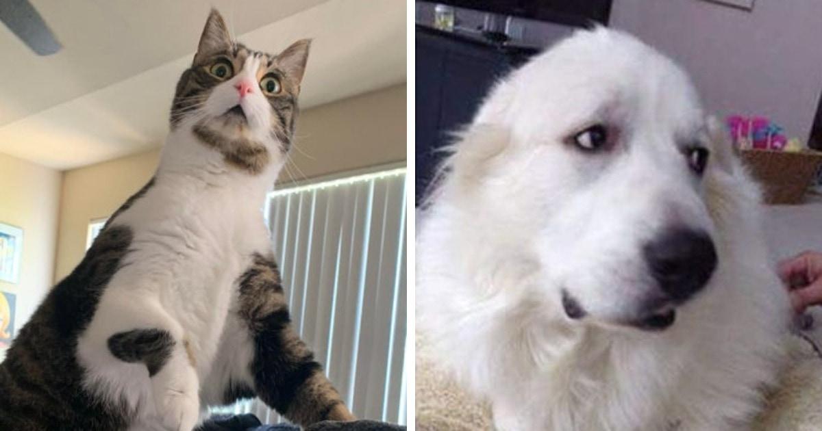 15 фото, которые доказывают, что котики и собаки проявляют свои эмоции так же ярко и понятно, как люди