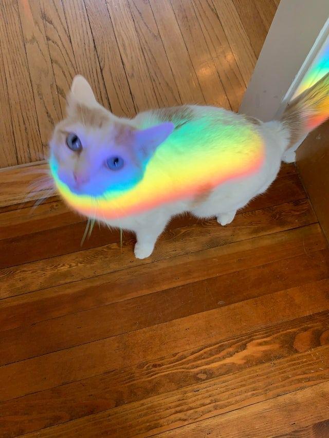 18 забавных фотографий, которые всем своим видом доказывают, что без кота и жизнь не та