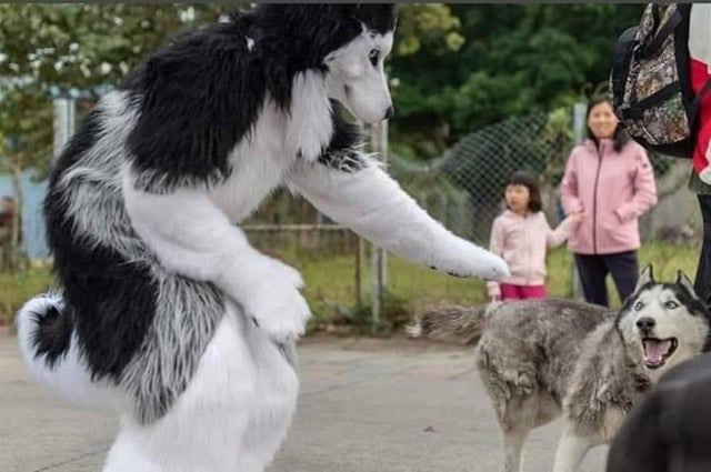 17 забавных, но очень уж странных фотографий животных, которые без труда введут вас в замешательство