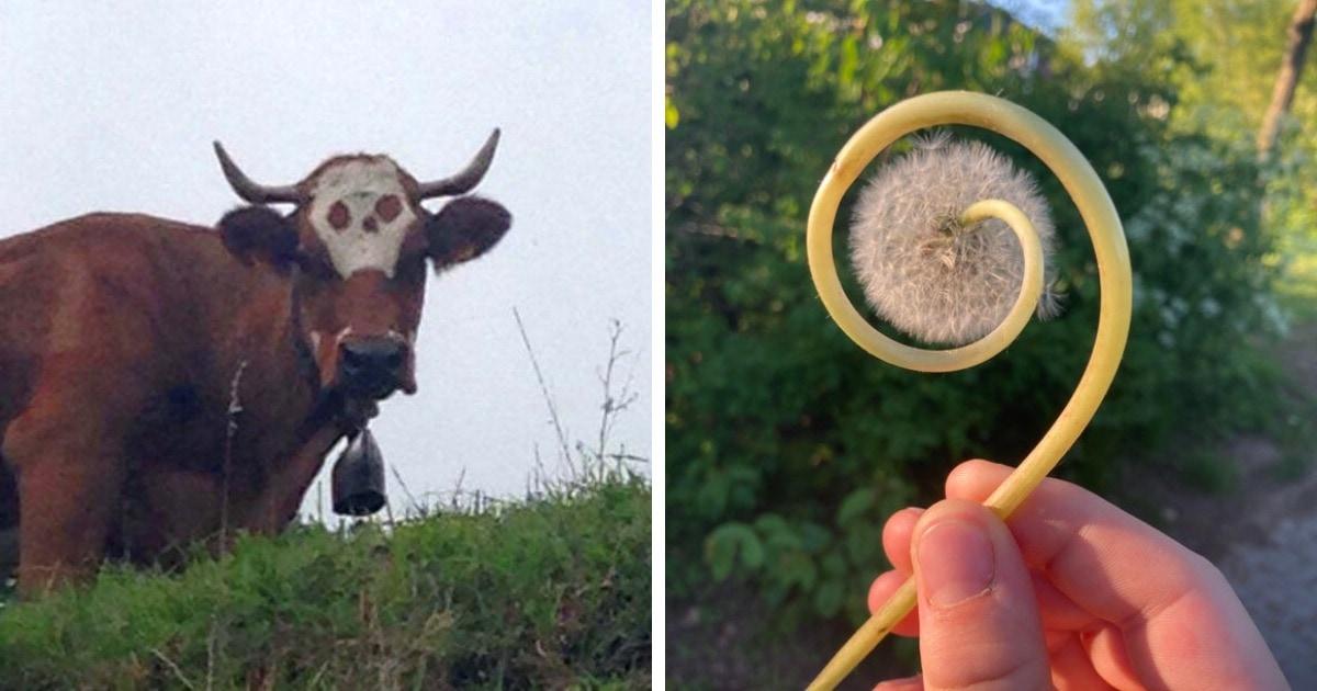 16 интересных фотографий, которые доказывают, что природа может удивить, когда этого совсем не ждёшь