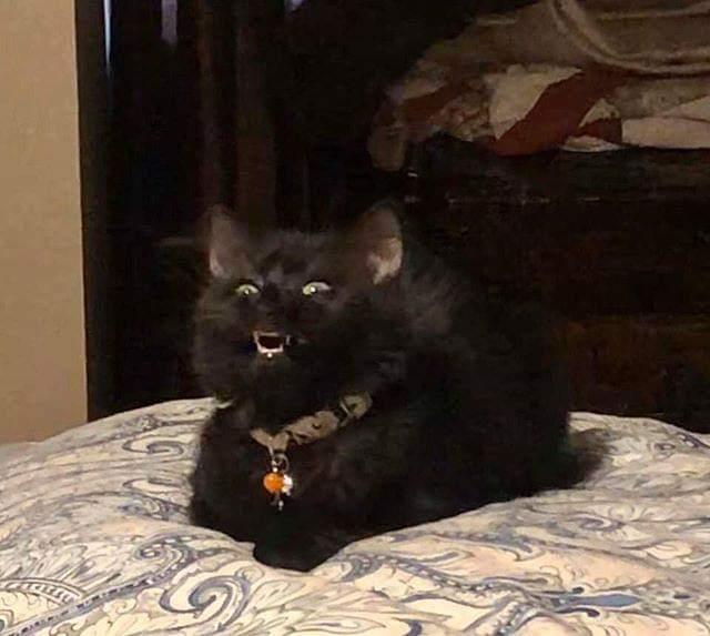 16 нелепых фотографий котов, которые наверняка вызвали бы у моделей желание крикнуть: «Удали!»