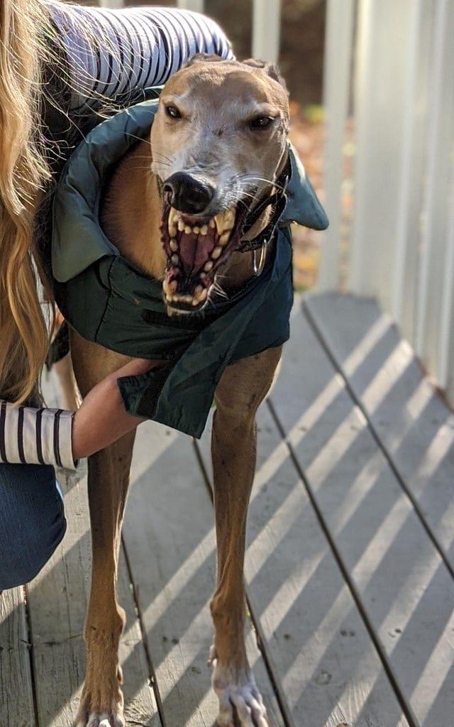 15 котов и собак, которые корчат такие мордашки, что становится понятно: они собрались пугать, а не умилять