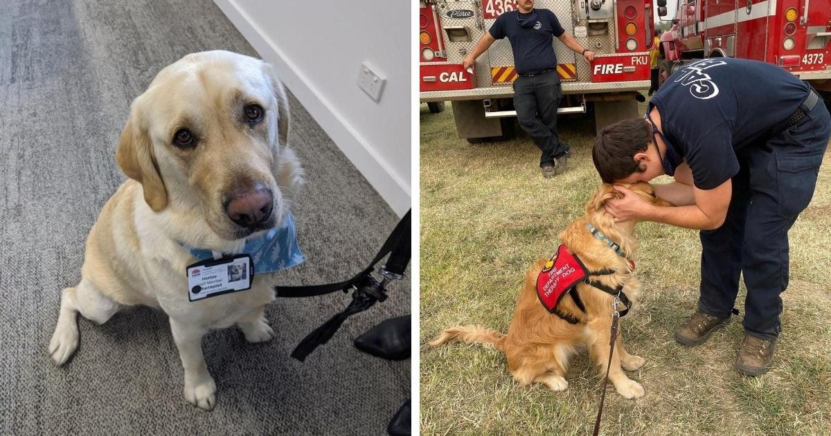 15 котов и собак, которые повели себя как отважные спасатели и заслуживают звания героического питомца