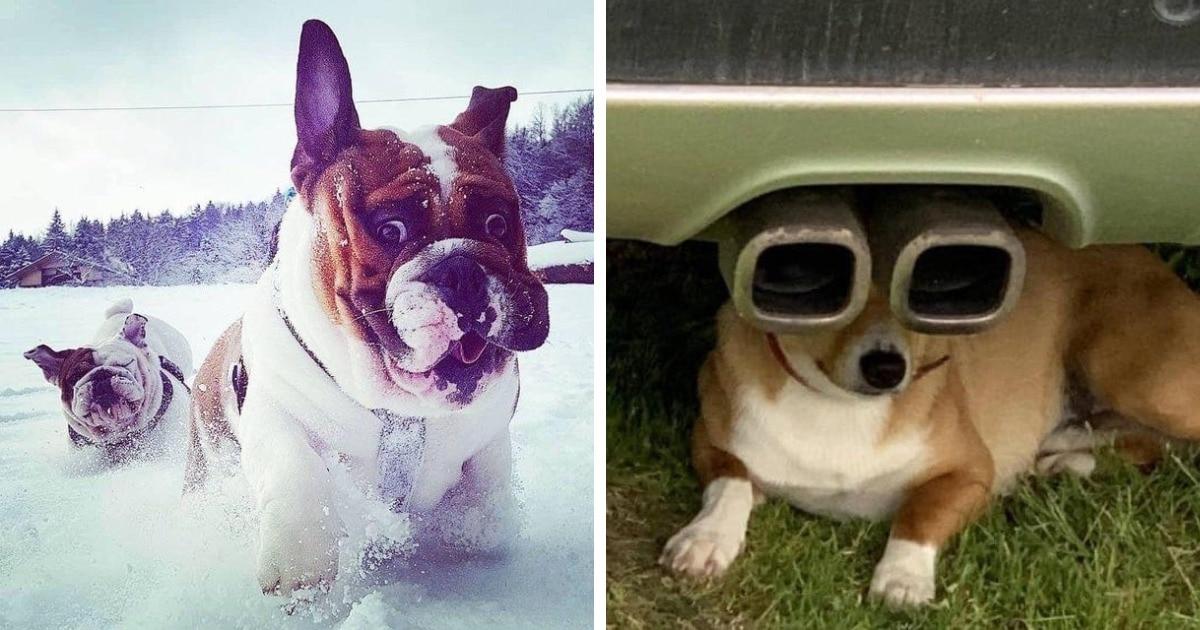 17 фотографий смешных и дурашливых собак, при взгляде на которых просто невозможно сдержать улыбку