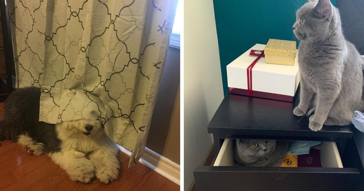 16 котиков и собак, которые спрятались с разной степенью успеха, но одинаково смешно