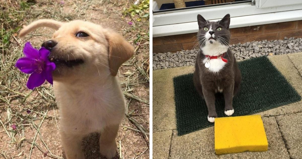 15 смешных котиков и собак, которые приносят хозяевам брокколи, камни, картошку, но только не тапочки