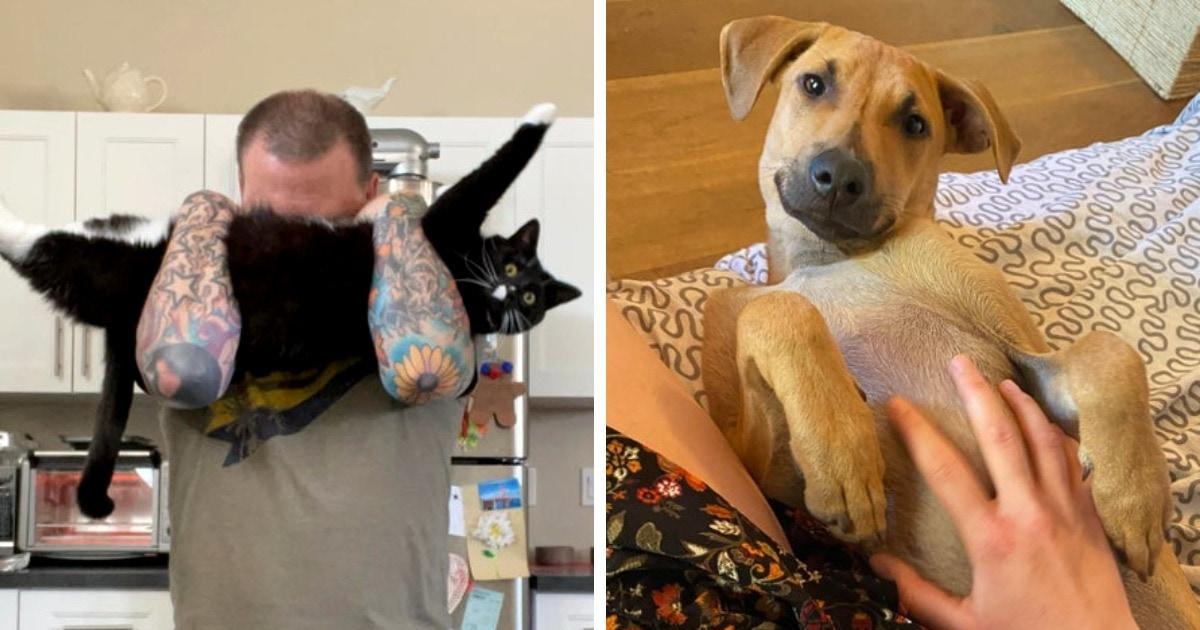 18 фотографий котов и собак, которых спасли новые хозяева, и никто из них не смог скрыть своего счастья