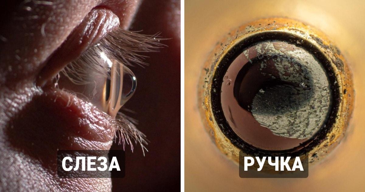 19 удивительных макроснимков, которые позволят увидеть привычные предметы невероятно близко
