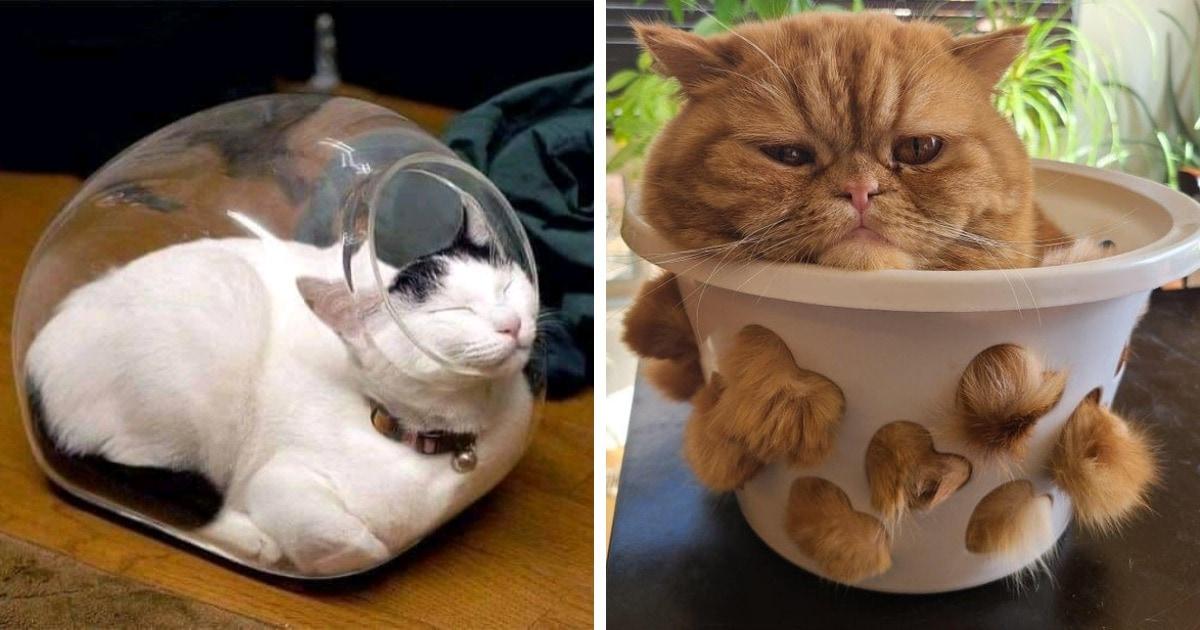 20 доказательств того, что коты — это жидкость, способная занять все возможные пространства